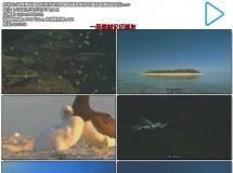 探索神秘海底世界浮游生物珊瑚海鱼类游动海底高清视频实拍
