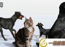 VizPeople:Free Pets