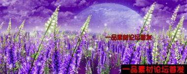 唯美薰衣草花海紫色之恋高端婚礼婚庆LED大屏幕频素材