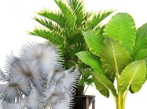 3D盆景植物  现代棕榈绿植盆栽