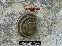 坚强蜗牛屹立高墙延时实拍高清视频素材
