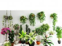 3D盆景植物 现代花艺盆栽吊兰绿植 3D模型下载