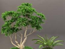 3D花草模型  植物盆景盆栽3Dmax下载
