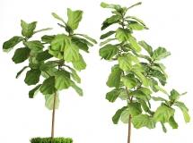 3D盆景植物  北欧藤编绿植盆栽3D模型下载