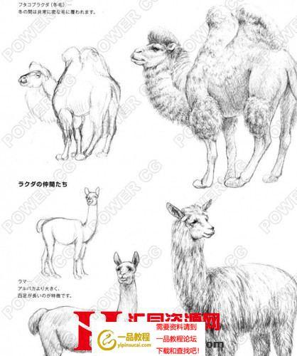 动物素描技法 日文 手绘绘画教程线稿图片参考 绘画